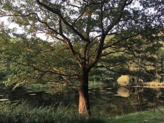 Baum an der Thaya
