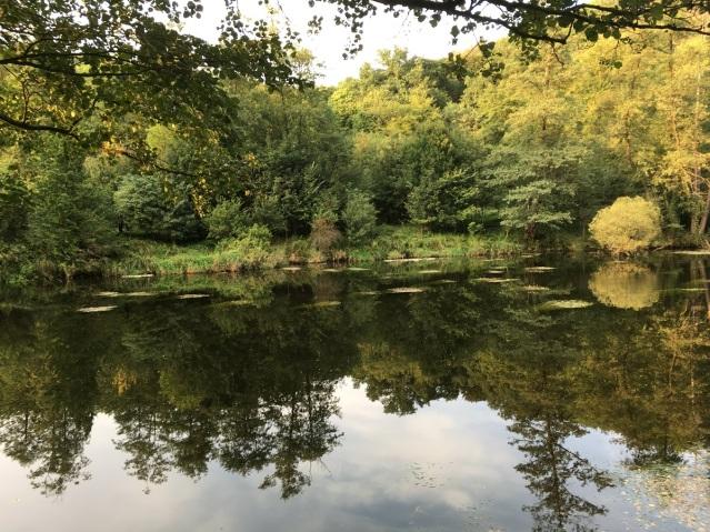 Hardegg Thaya goldener Herbst bei Nock
