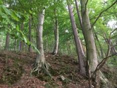 Hardegg_Bäume_Nähe_Nock