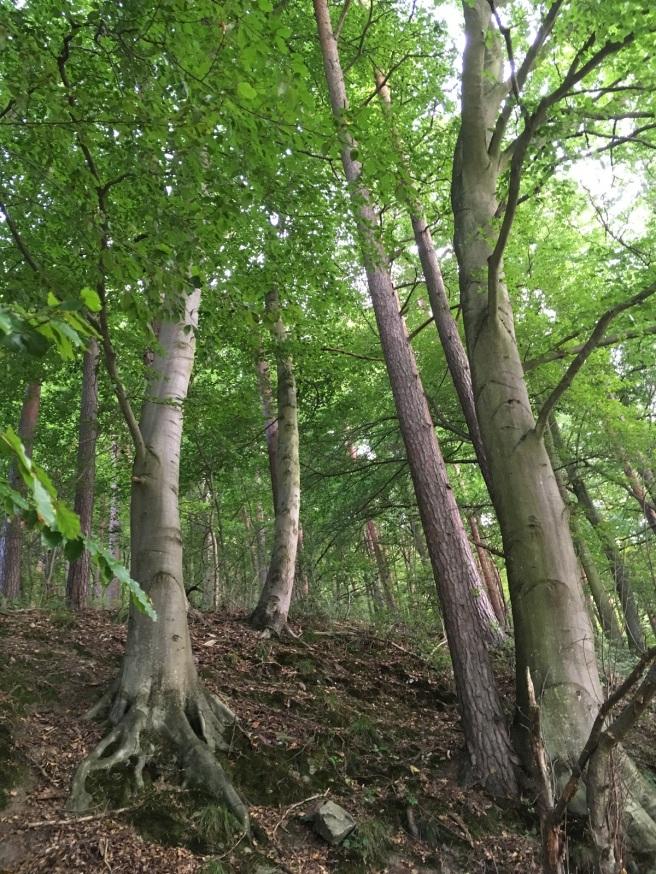 Hardegg_hohe Bäume_Nähe_Nock