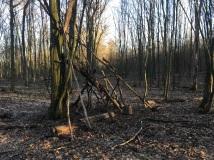 NP Thayatal Wohnen im Wald 4