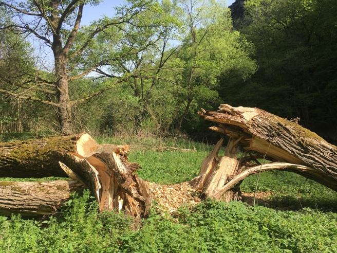 Baum gespalten