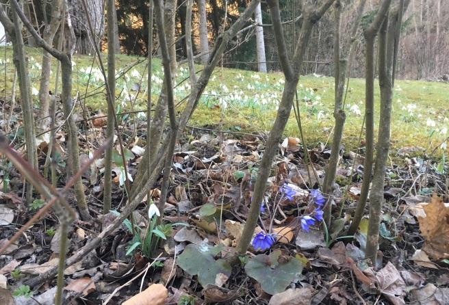 Frühlingsgruss 1