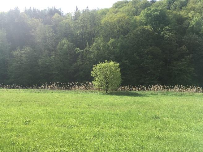 Baum Einzelstellung.jpg