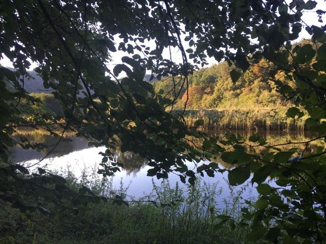 Herbst Thayatal III 2