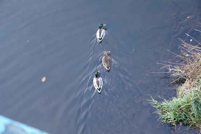 drei Enten II