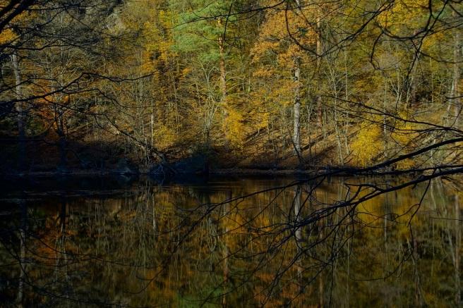 Spiegelungen Kaja Teich 1