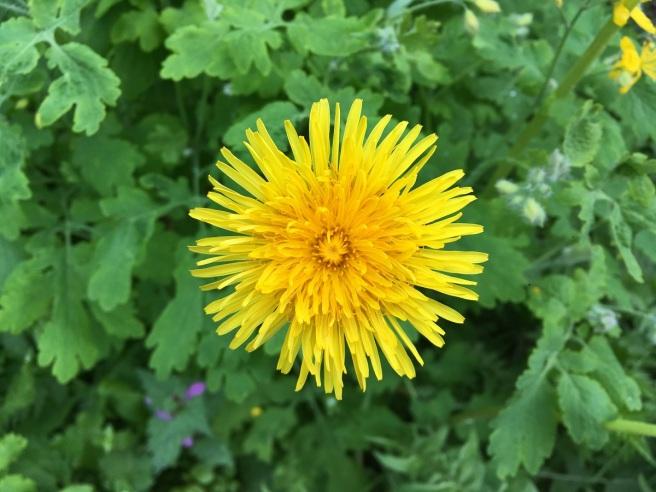 Gelbe Blume 2019