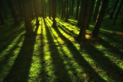 nature-3801537_1280
